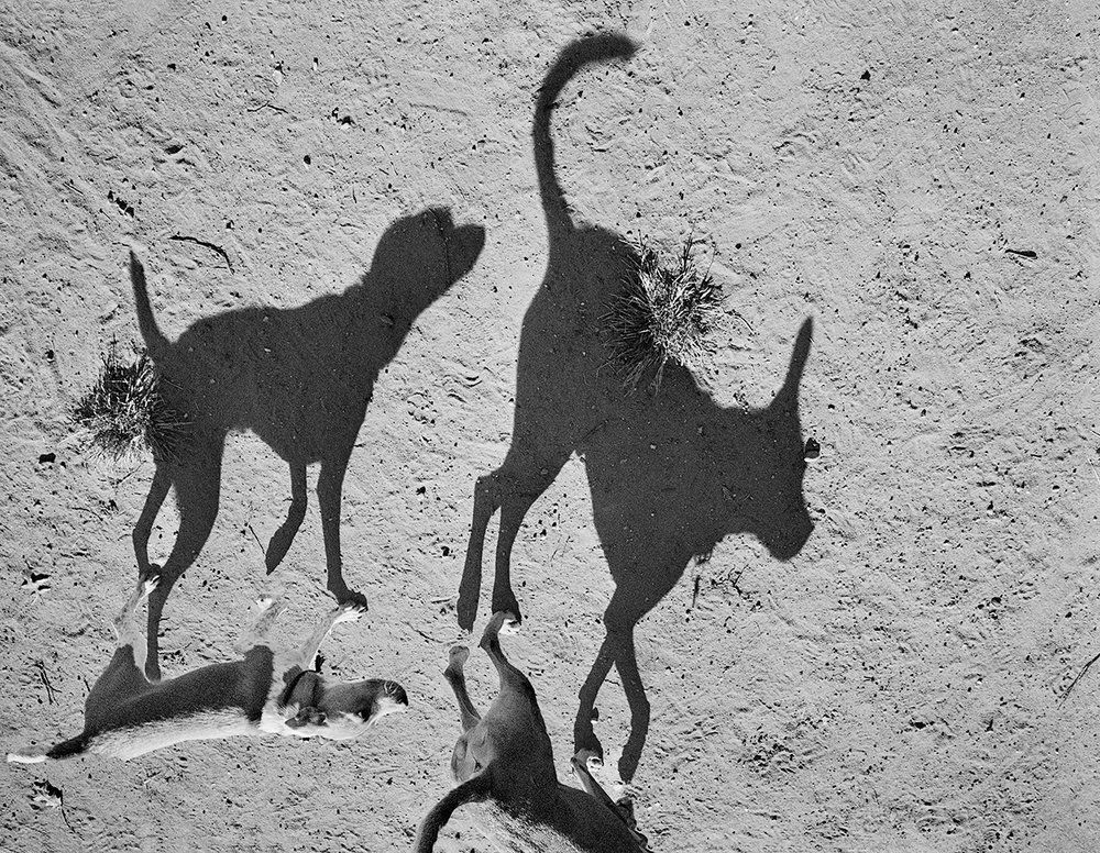 Thomas Roma,  Untitled  from the series  Plato's Dogs,  2011–2013