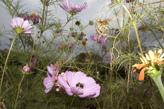 726__630x500_mendoza_flowers-4.jpg