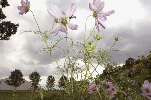 724__630x500_mendoza_flowers-2.jpg