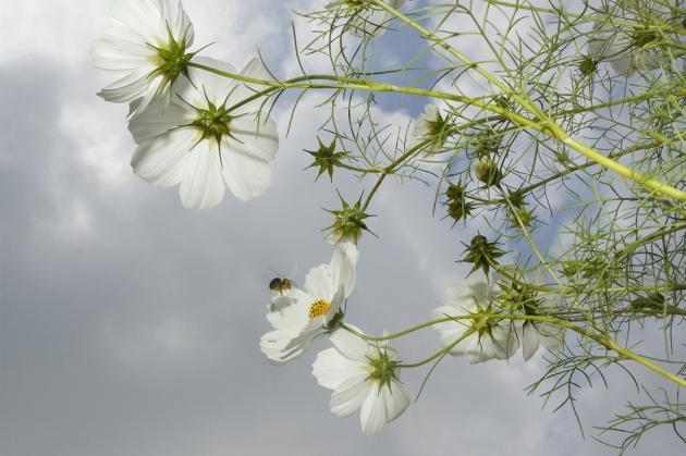 723__630x500_mendoza_flowers-1.jpg