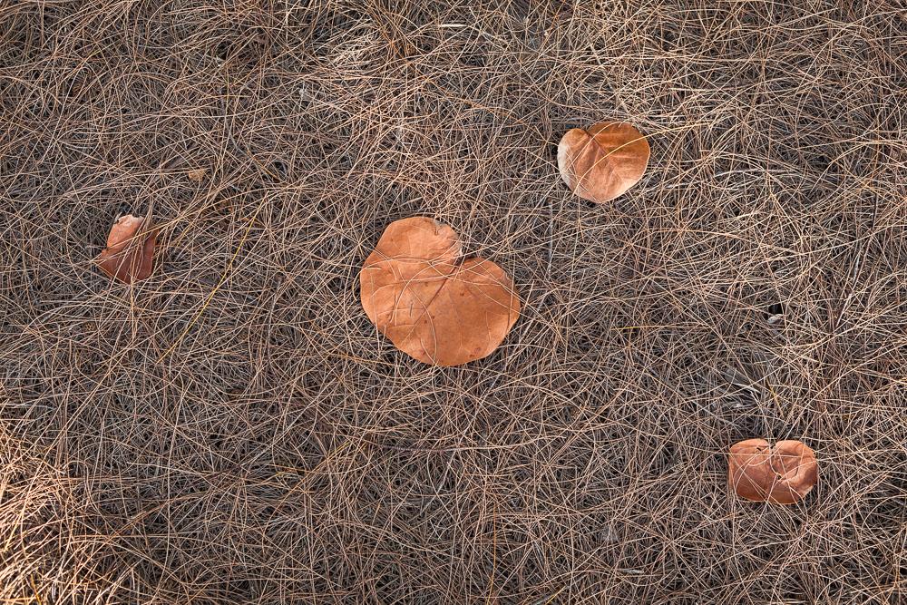 Lambrecht_JungleRd_Leaves.jpg