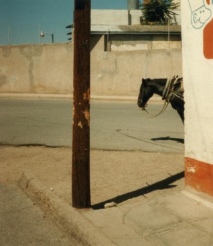 4863__630x500_horsefromthevisitorwalking1000milesthroughmexicosstreetsclarrycwik1985.jpg