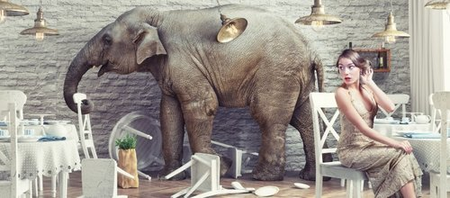 Let\'s Talk About the Elephant in the Room — Werschler Aesthetics ...