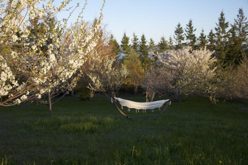 smaller size white orchard.jpg