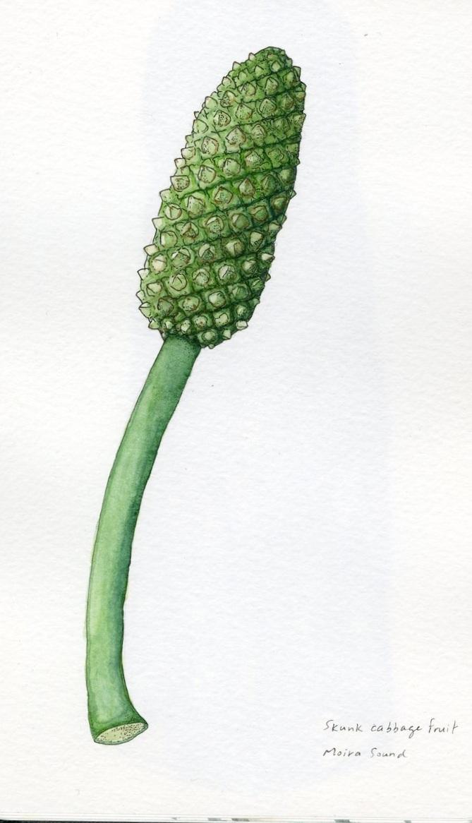 skunkcabbage.jpg