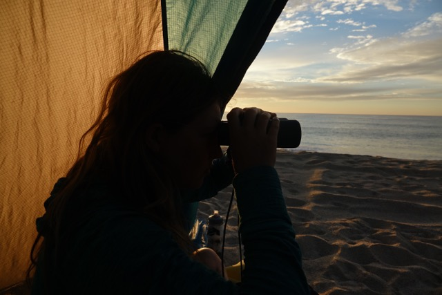 Mara watches humpback whales at first light on the Sea of Cortez .