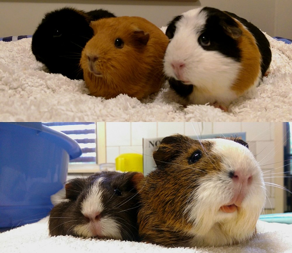 The Fur-mily (Clockwise from top left): Lisa, Philly, Chup Chup, Zoe and Zara