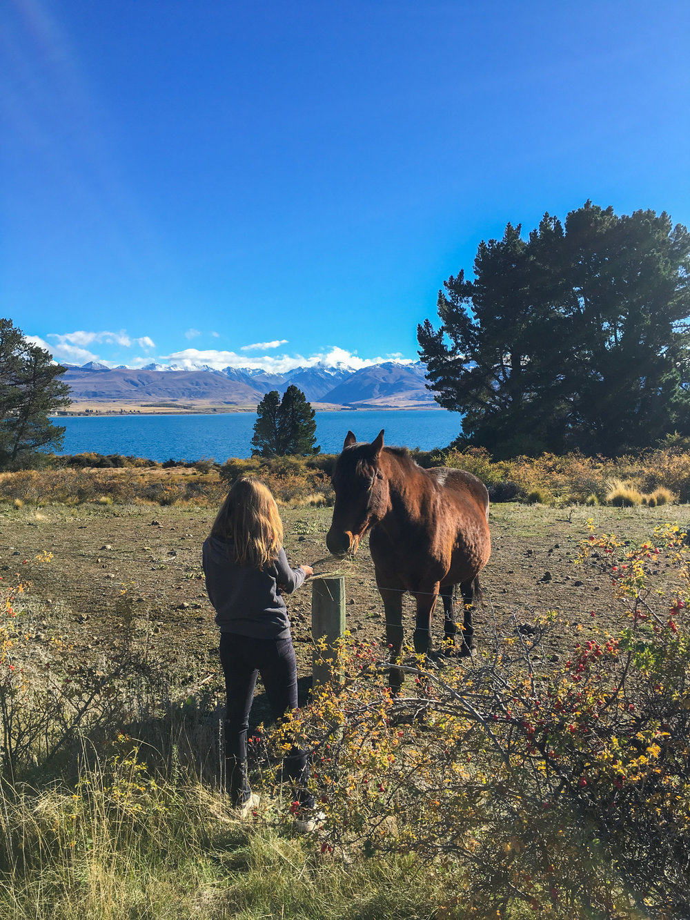 Beautiful horse at Lake Tekapo during a walk