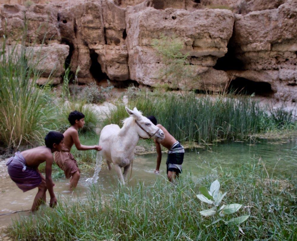the bathing of the white donkey
