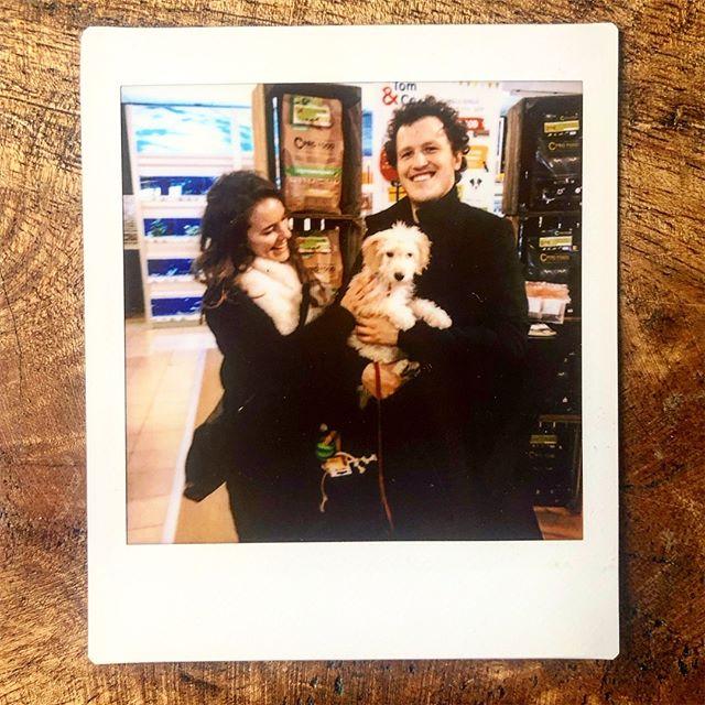 Even gratis fotoshoot in de dierenwinkel? Ja, graag! Dit beest kost ons al een fortuin! @cleodecockapoo #cockapoo