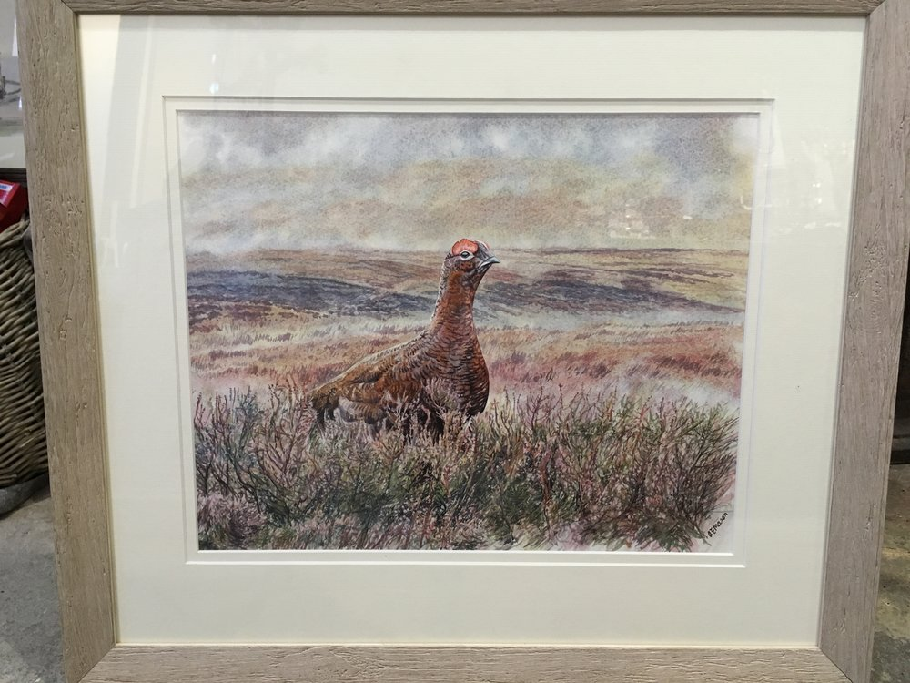 Red Grouse original watercolour £350