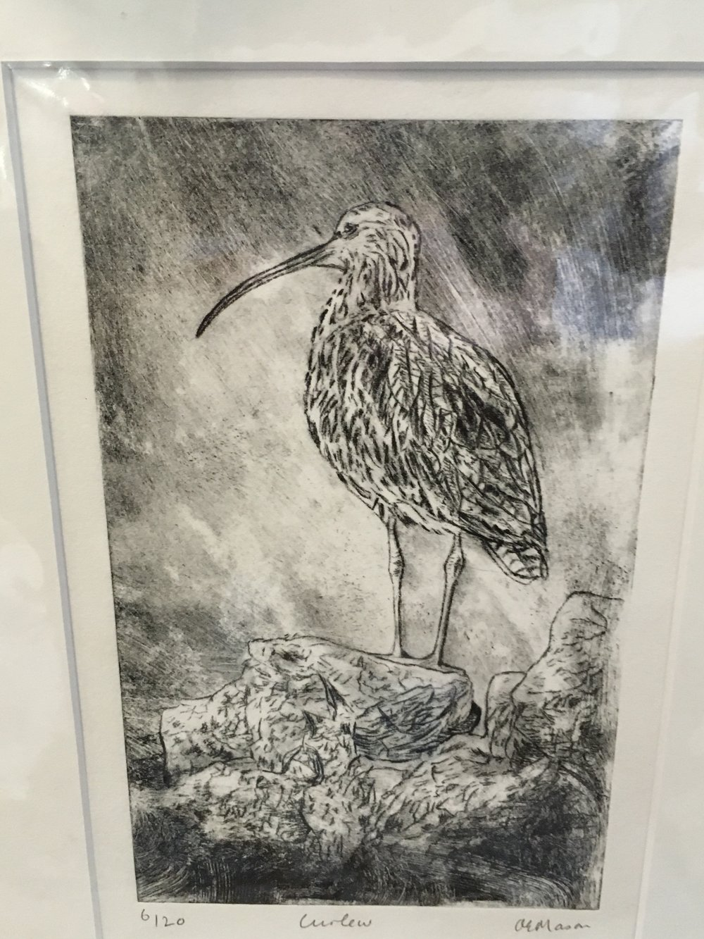 Engraving Curlew limited edition print 6/20 £42.00