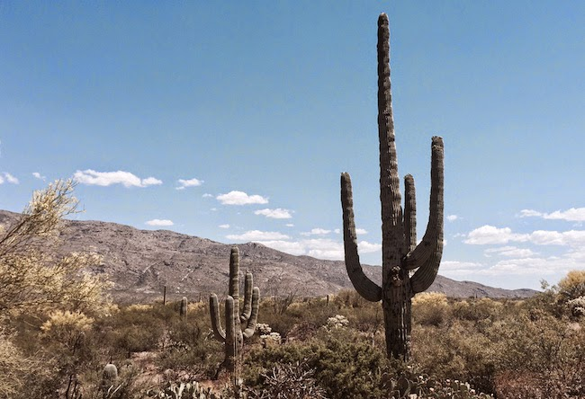 The Anti Scotland -- Couldn't resist a slight detour to check out the Saguaro National Park and its impressive display of iconic cacti.