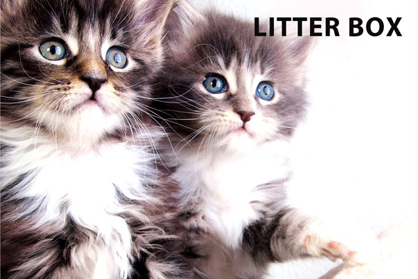 Multi-Purpose Deodorizer Usage: Litter Box