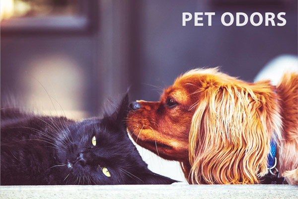 Multi-Purpose Deodorizer Usage: Pet Ordors