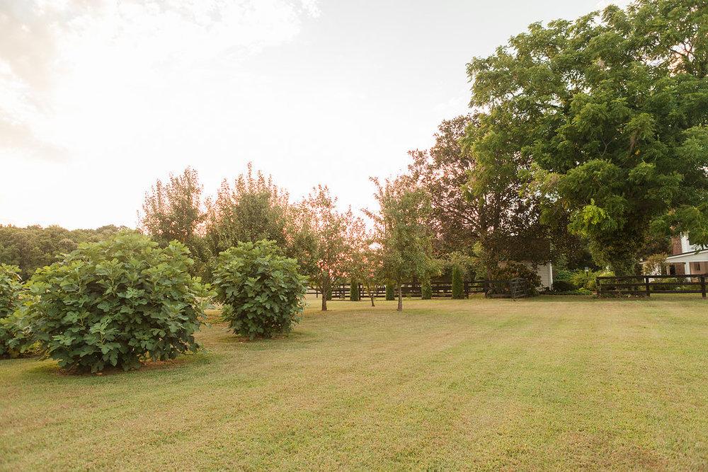 Eastern Shore VA Farm (134).jpg