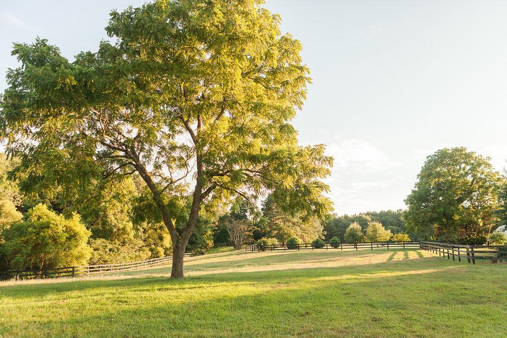 Eastern Shore VA Farm (36).jpg