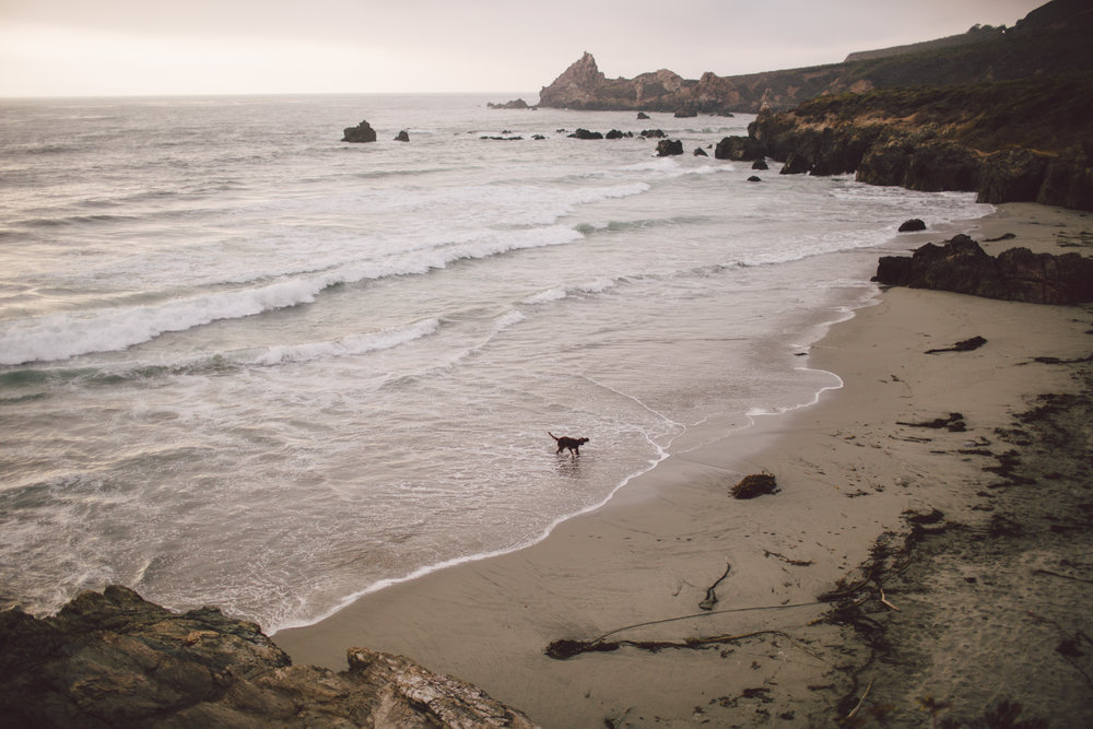 dog documentary big sur lifestyle children photographer intimate