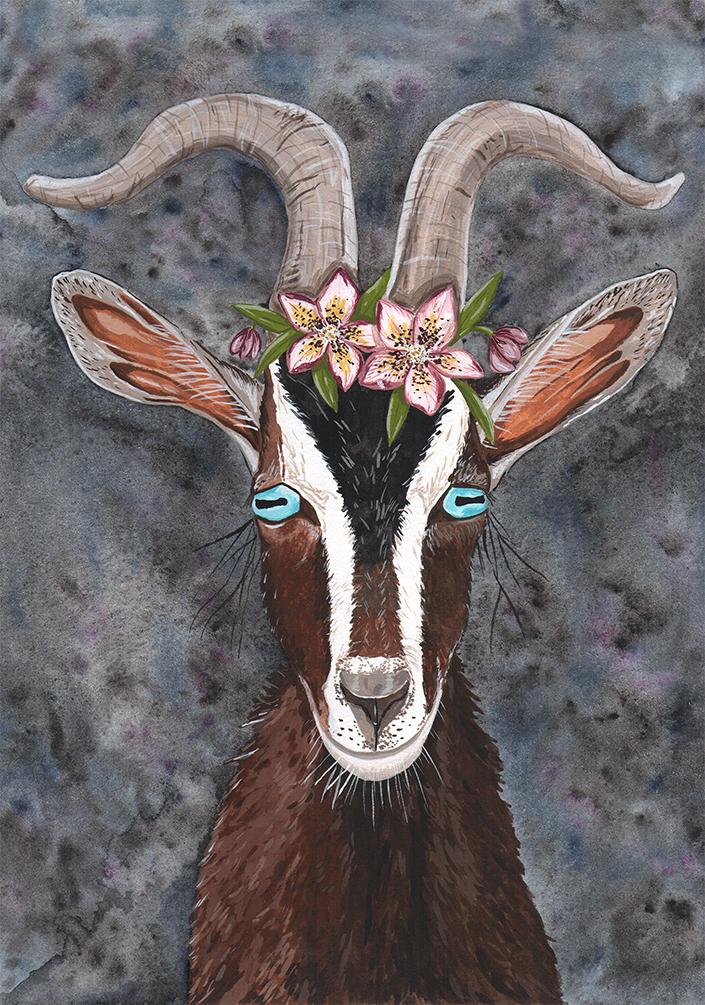 goat_corrisheff.jpg