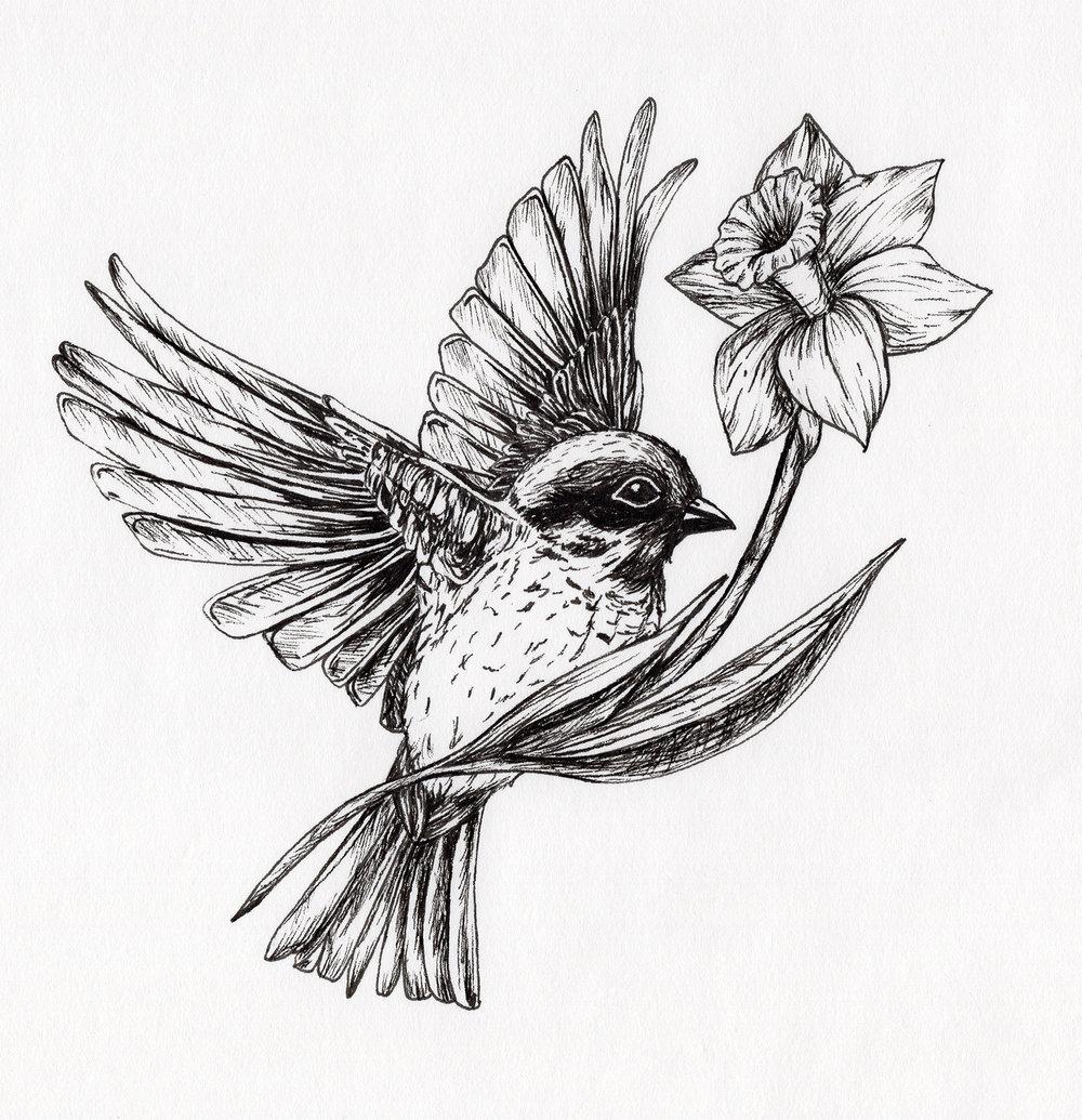 birdscan.jpg