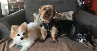 This is Alfy, Manolo, and Josie, submitted by Teresa