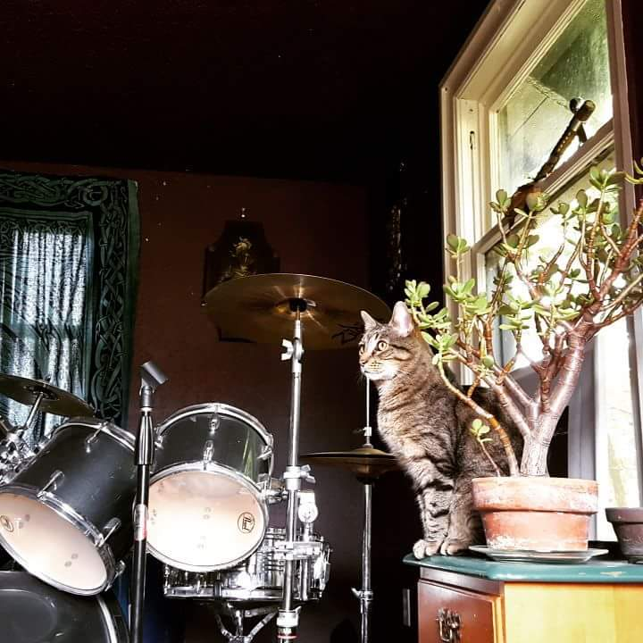 Bob Snarley, the jamming cat with the best name and democratic values, submitted by Alana