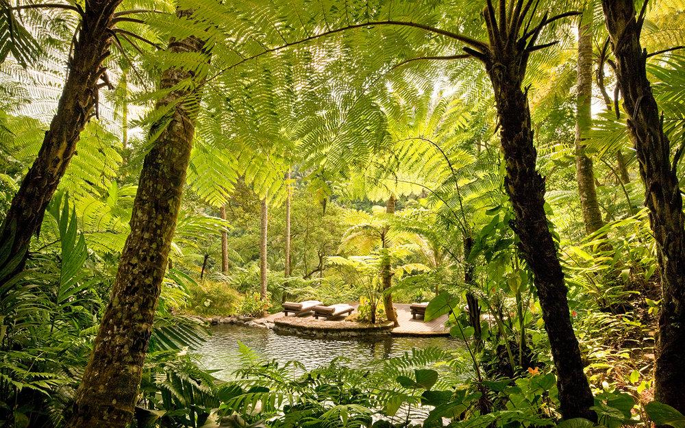 COMO Shambhala Estate - The Estate -  Kedara Water Garden 2.jpg