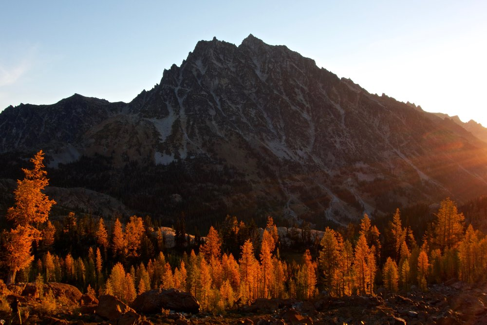Sunrise on larches and Mount Stuart