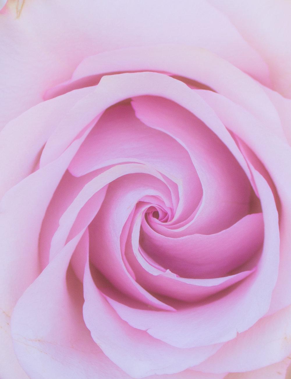 pink flower (1 of 1).jpg
