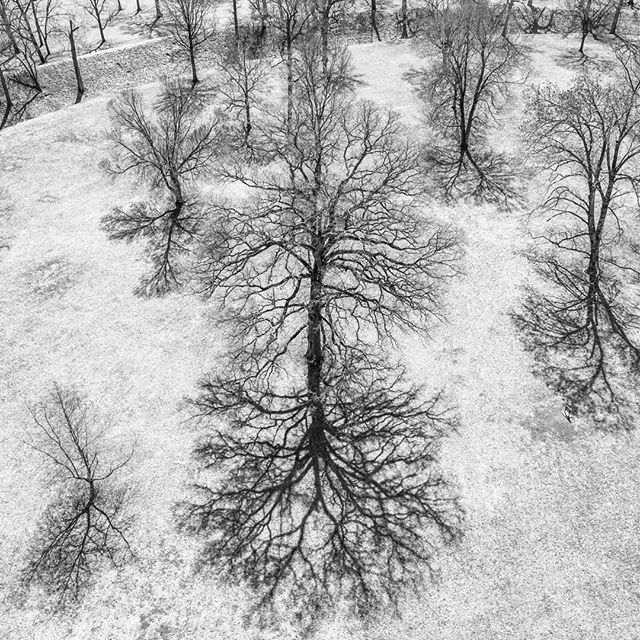 Rorshac test...what do you see? . . . #dronephotography #drone #djiglobal #fromwhereidrone #drone_countries #explorecreate #beautifulplaces #droneofficial #skypixel #skyhilife_drones #gameofdronez #dronedose #dronespace #dronedaily #iamdji #droneart #thedroneu #droneglobe #dronenerds #majestic_earth #mastershots #beautifuldestinations #electic_shotz #earthpix #dronepals #agameoftones #bw #wanderlust #abstractart #tree