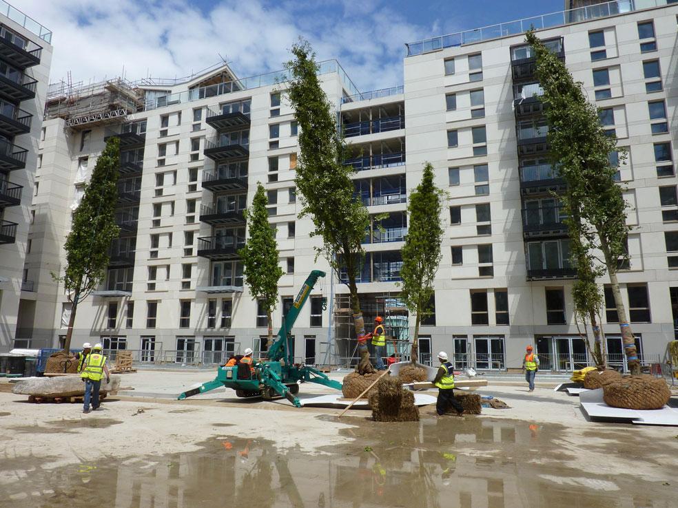 Tree-planting-N10.jpg