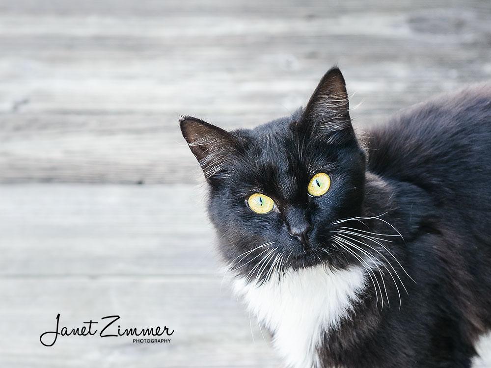 Natural Style Cat Portrait