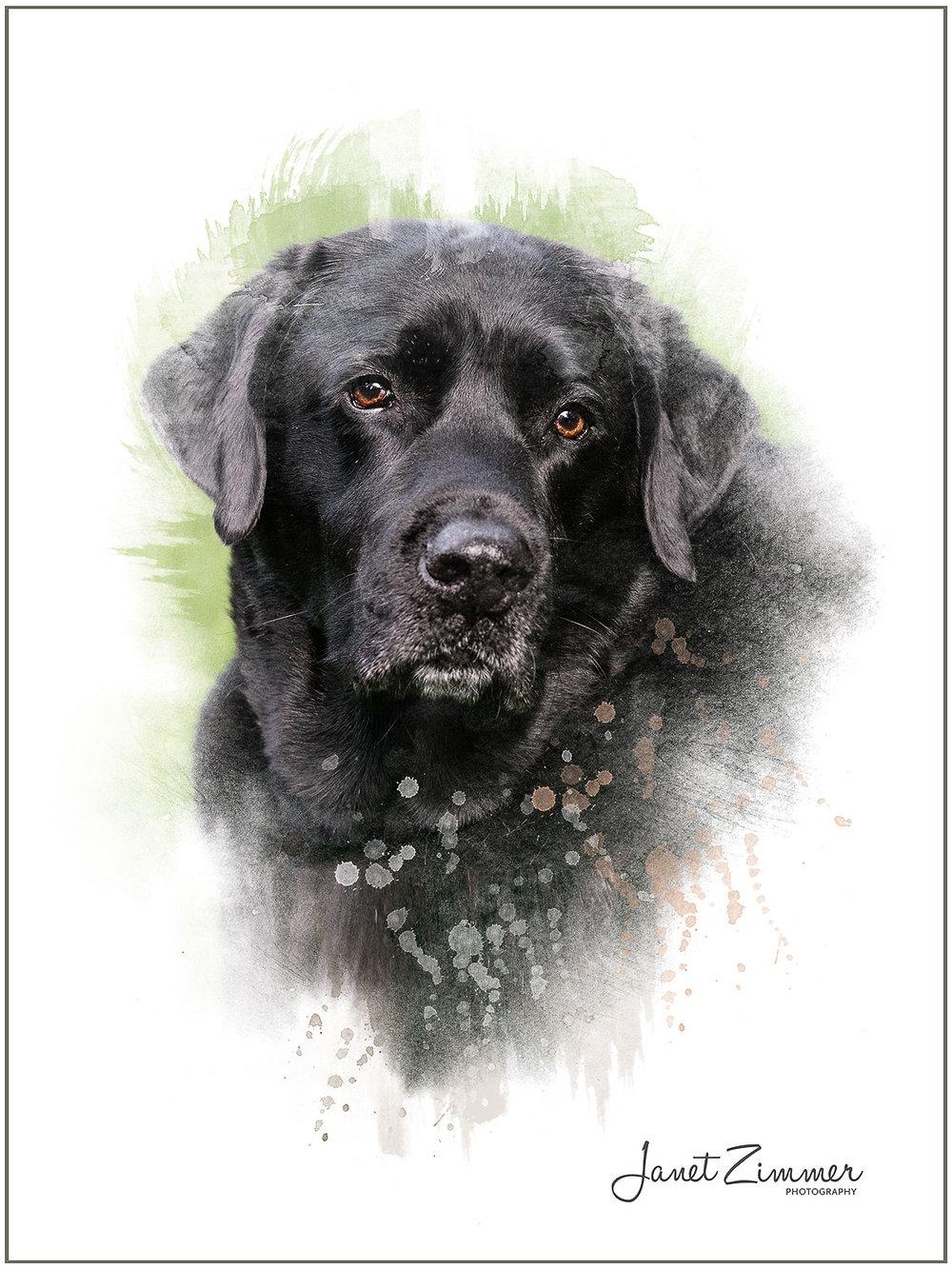 Pet Portfolio — Janet Zimmer Photography | Pet Portraits
