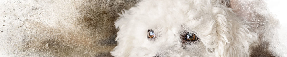 Pricing — Janet Zimmer Photography | Pet Portraits