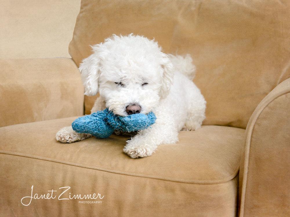 FAQs — Janet Zimmer Photography | Pet Portraits