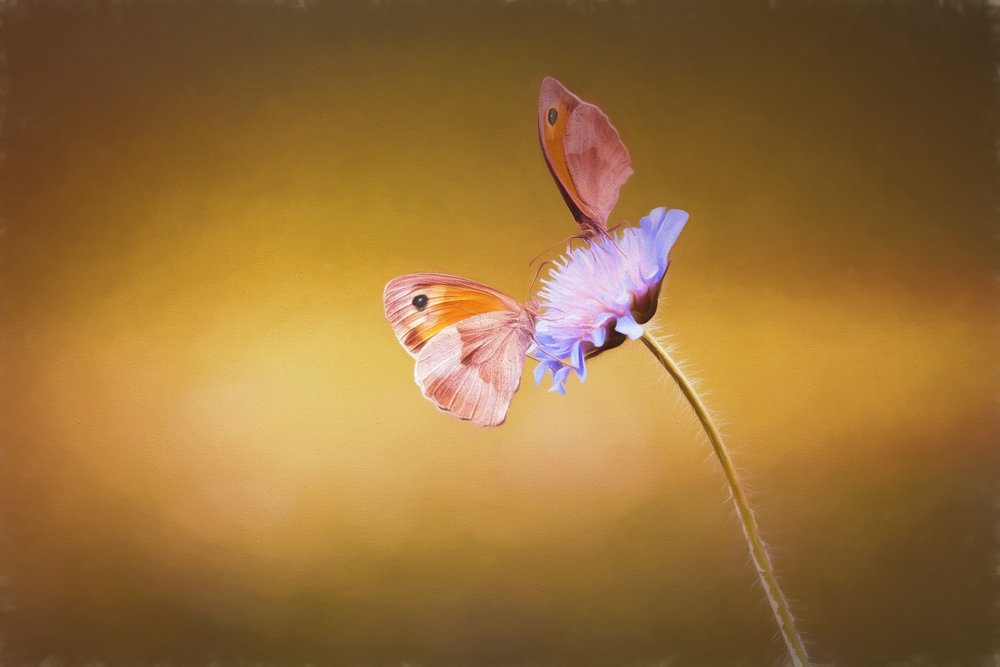 nature-blossom-wing-photography-leaf-flower-514177-pxhere.com.jpg