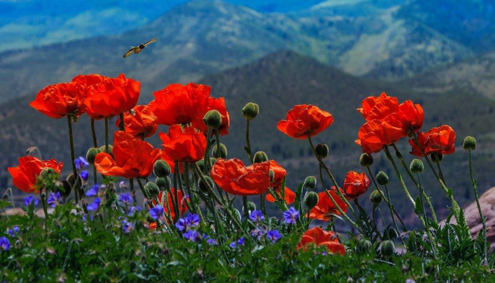 By Tricia Scott  - tall poppy syndrome