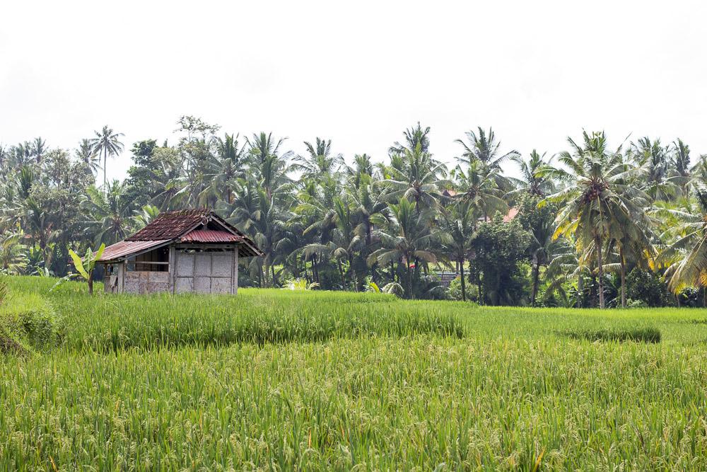 Indonesia-1-2.jpg