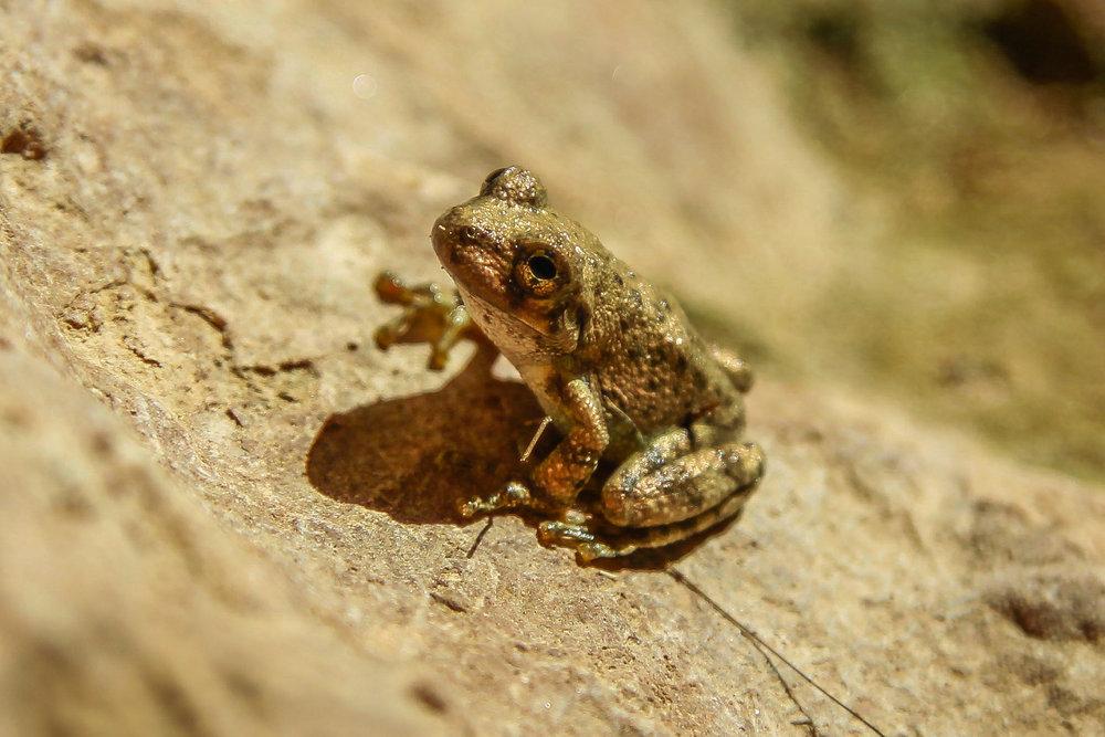 frog1 (1 of 1).jpg