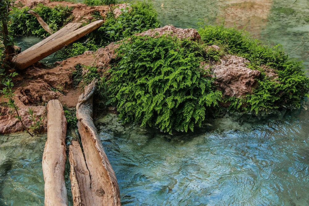 oasis8 (1 of 1).jpg