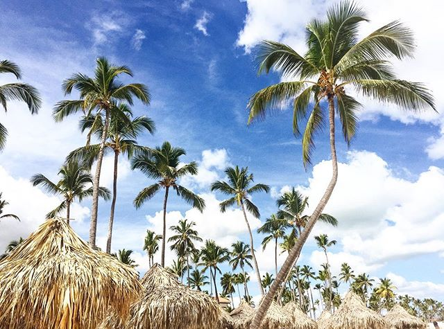 📍: 🇩🇴 | Don't forget to look up ⬆️🌴| #playabavaro #bavarobeach #puntacana #igerspuntacana #ig_puntacana #toppuntacanaresorts #meliacaribetropical #thelevelatmelia #thelevelatmeliacaribetropical #thelevel #dominicanrepublic #republicadominicana #igersdominicanrepublic #igersdominicana #ig_dominicanrepublic #beachholiday #luxuryresorts #photooftheday #picoftheday #bestoftheday #travelgram #instatravel #instaphoto #instapic #instagood #traveladdict #traveldeeper #lovetheworld #tourtheplanet #letsgoeverywhere