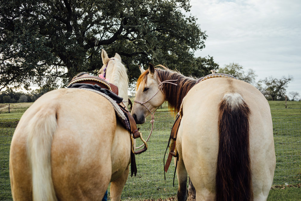 Horses at the Farm - StarHill Farms has onsite stables and trails. Plan ahead and schedule time with our horses at your next visit. Ask about availability when booking your stay.