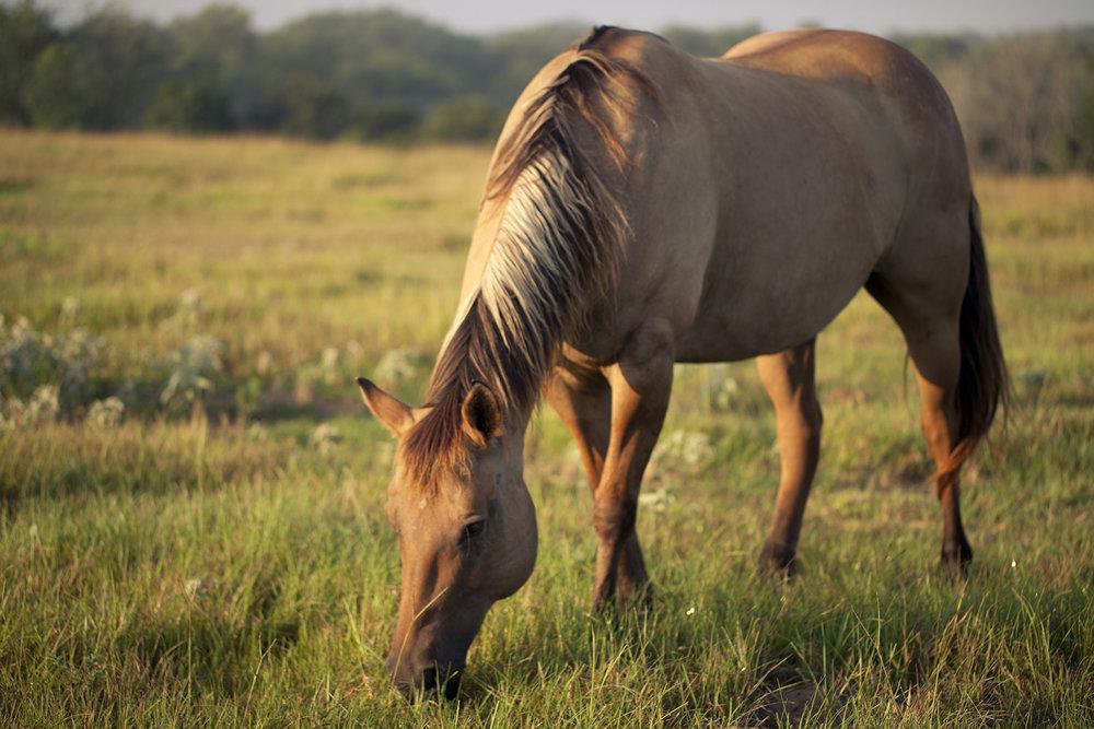 Email us to arrange for horseback rides before your next visit.  stay@starhillfarms.com