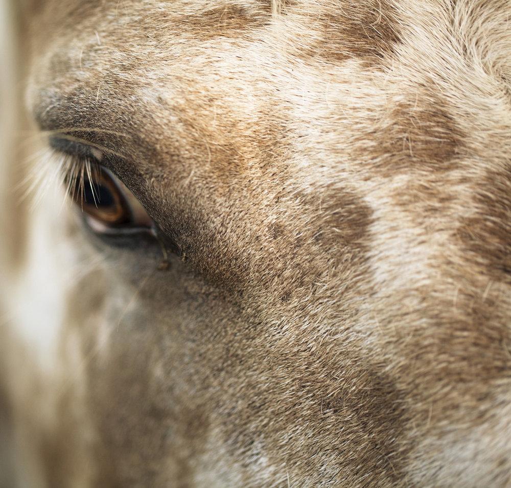 horse_eye.jpg