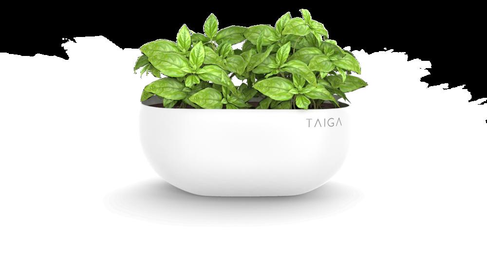 Basil Pot.png
