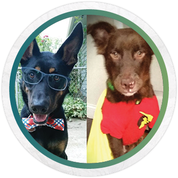 Dog enthusiast - stylist | photographerMODELSBarley (left)Bodhi (other left)