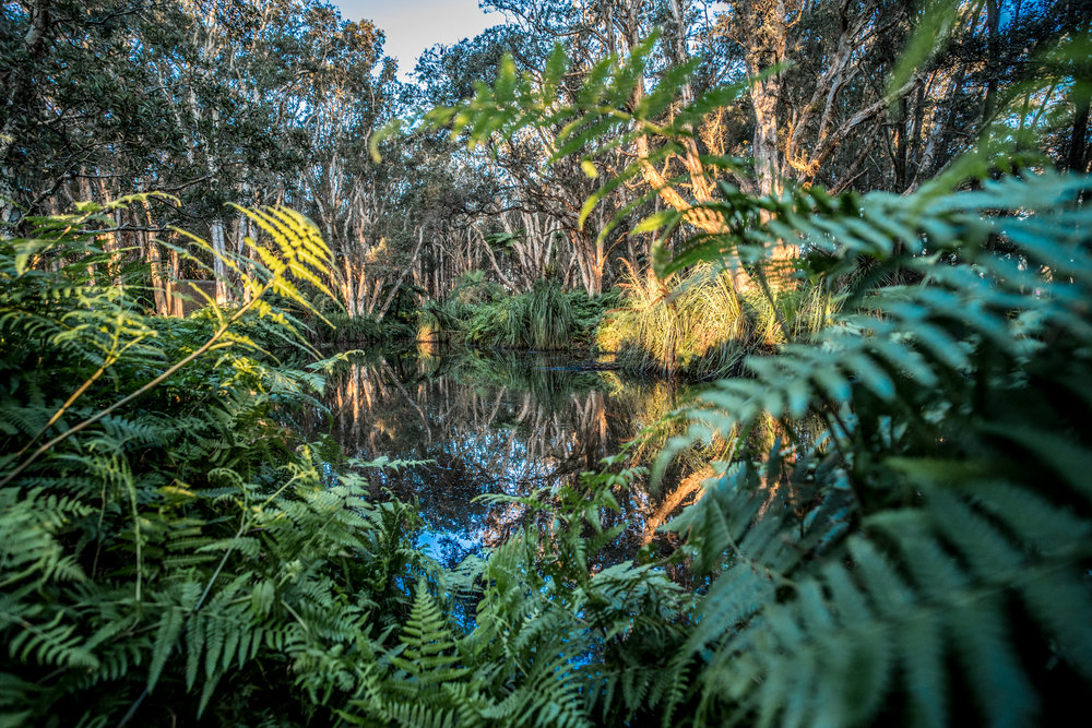 Sydney Centennial Parklands Photography Workshop