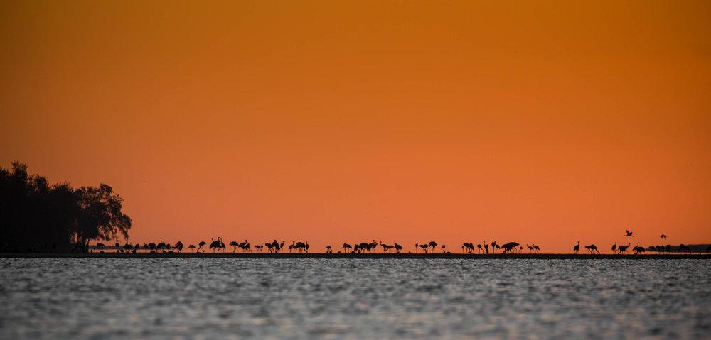 Photo-Organic-Australia-Photography-Wildlife-Safari-Northern-Territory-18.jpg