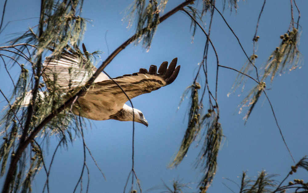 Photo-Organic-Australia-Photography-Wildlife-Safari-Northern-Territory-19.jpg