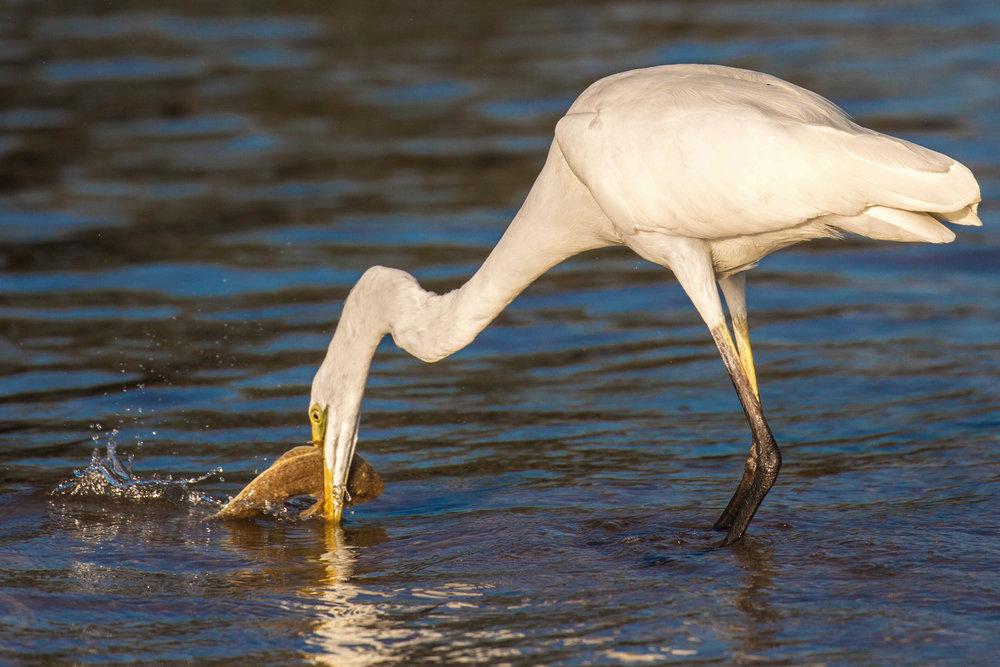Photo-Organic-Australia-Photography-Wildlife-Safari-Northern-Territory-23.jpg
